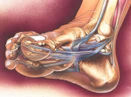 skadat ligament i foten
